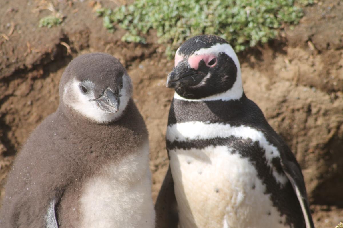 Naar Patagonië reizen met kinderen